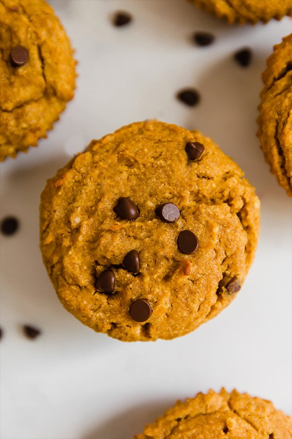 A paleo pumpkin muffin with chocolate chips on top.